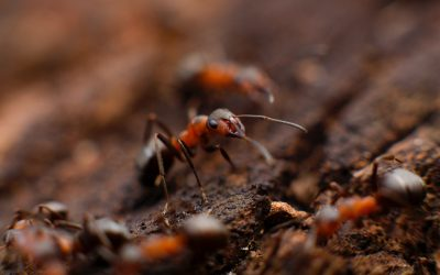 Are You Living as a Piss-ant Avoiding Being Trampled, or As a Powerful, Purposeful Being?