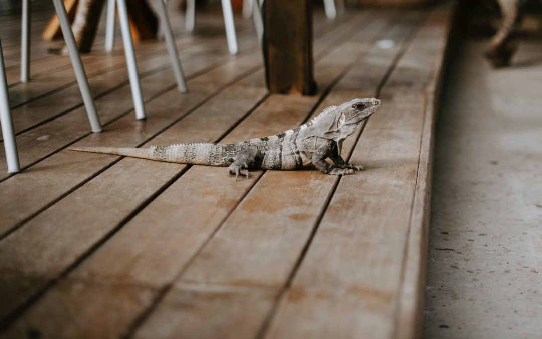 Sometimes, a Lizard is Just a Lizard