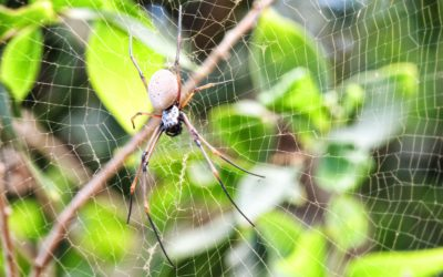 Life Lessons I Learned froma Spider
